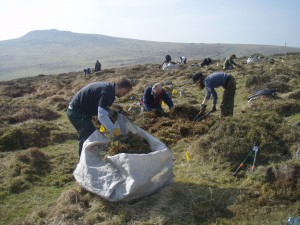 Clearing away the cut gorse.