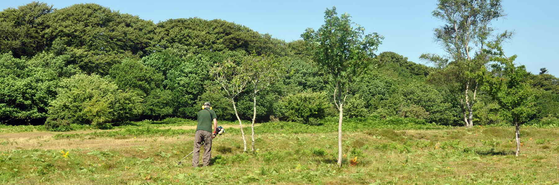Cutting bracken on the banks of Plymouth Leat