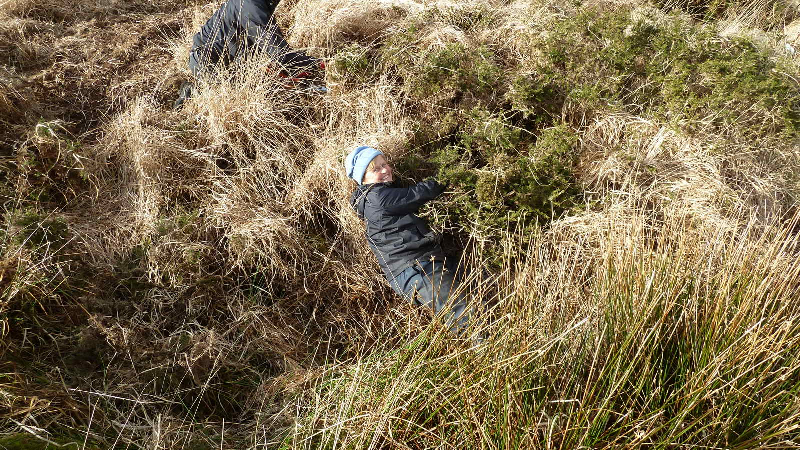 Rolling in the hay - or rolling in the gorse!