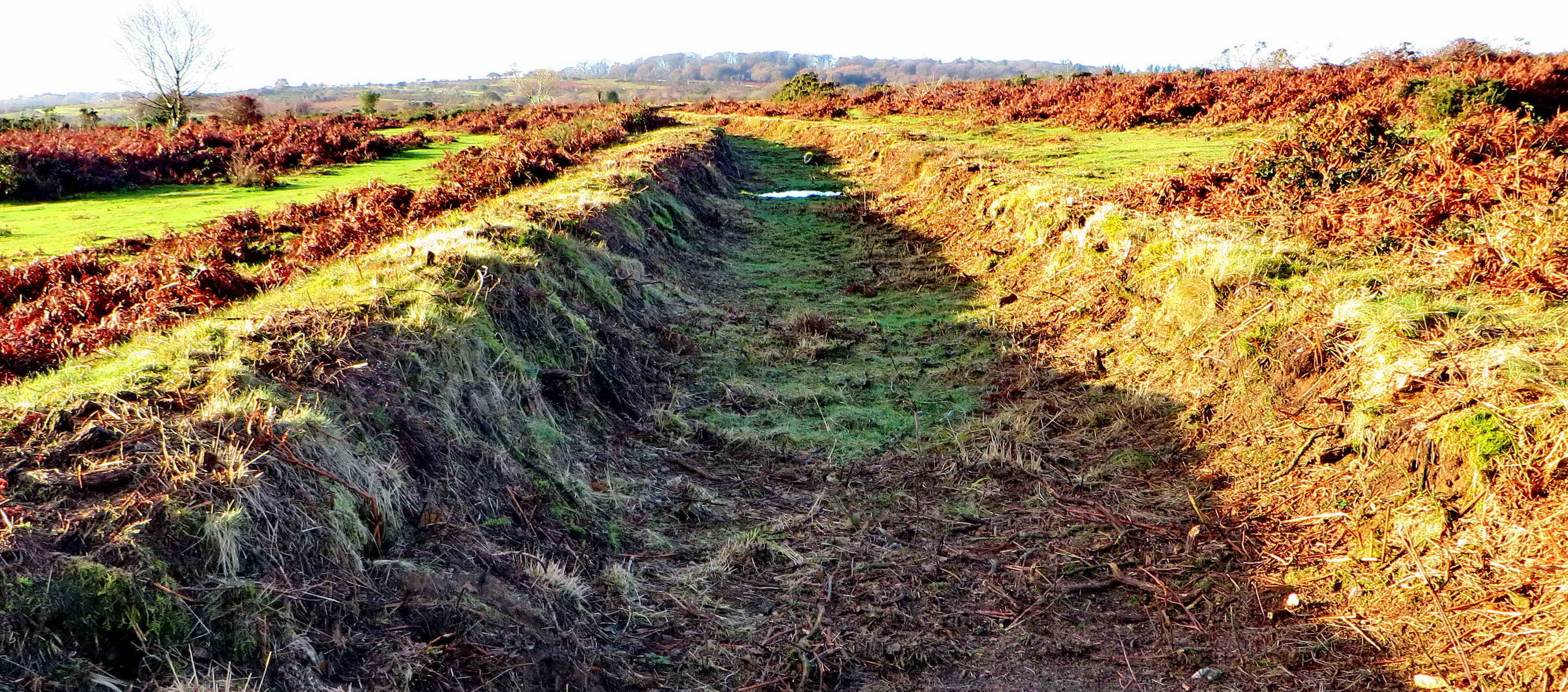 Looking along the section of leat already cleared.