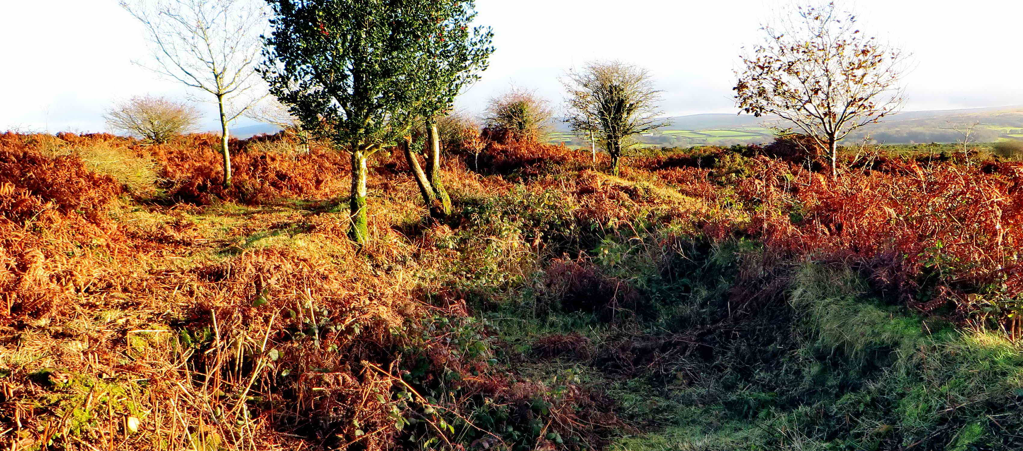 Looking the other way - at the section that needed to be cleared.  Note the holly tree, it appears in the last photograph.
