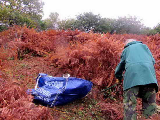 2 Raking and collecting bracken from paths