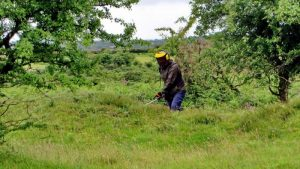 A volunteer operating a brushcutter/strimmer.