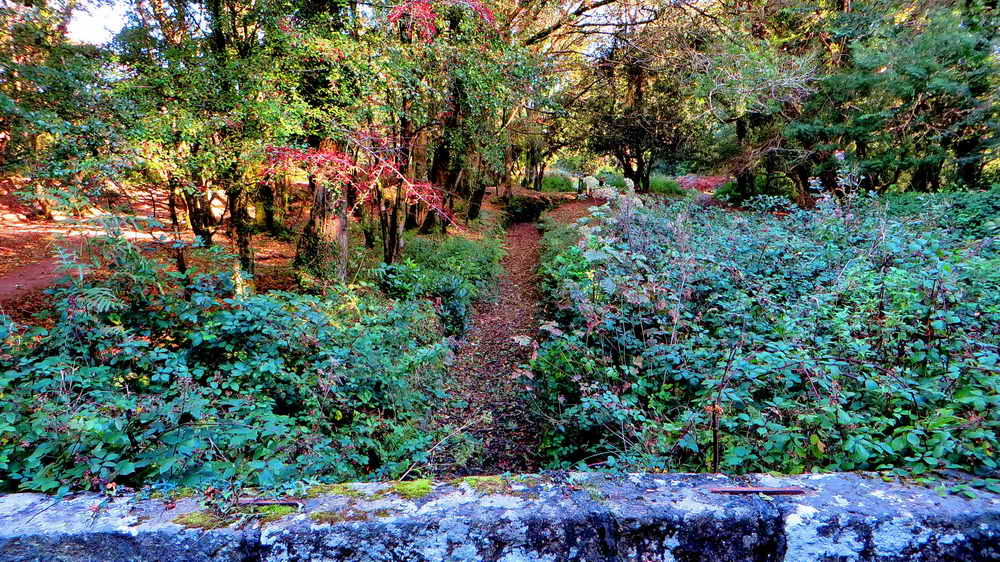Looking from the bridge towards Yelverton - before cutting the brambles.