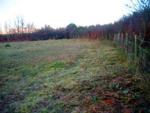 Pudsham Goat Field after clearing, with the fence visible. Photo: Hilary Marshall