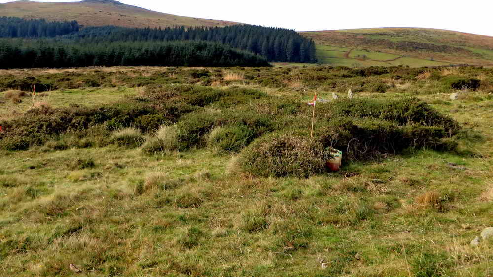 Typical area for clearing, Western gorse