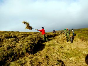 Dispersing cut gorse