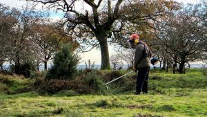 Machinist cutting gorse at the hilltop