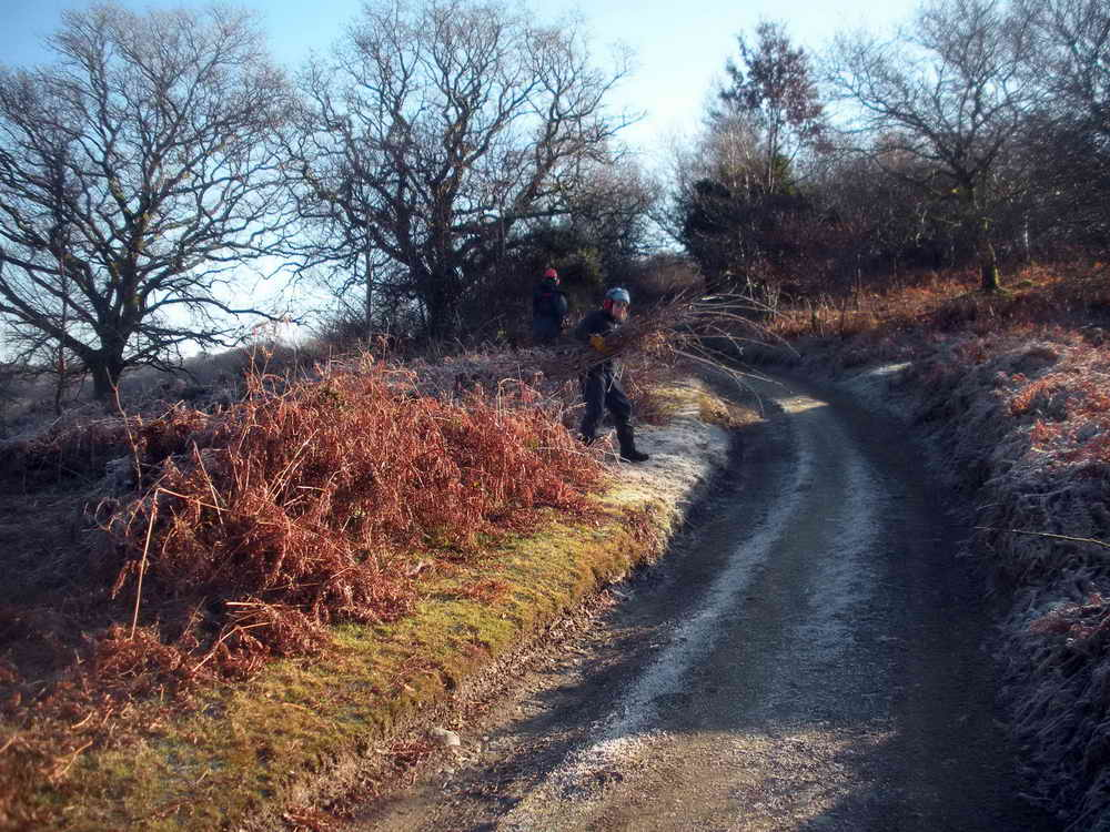 Removing cut saplings. Photo: Hilary Marshall