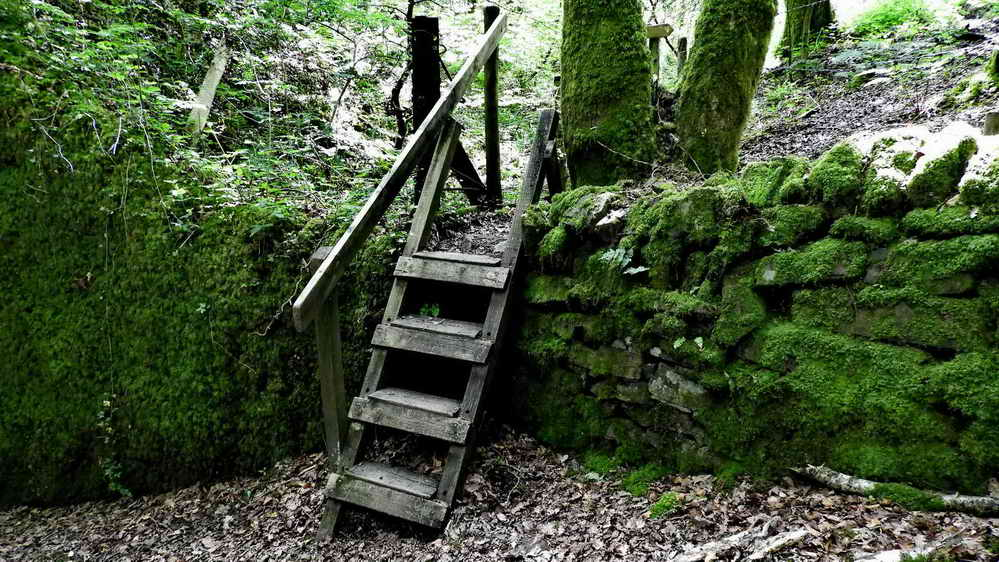 Ladder stile into Mabor Wood