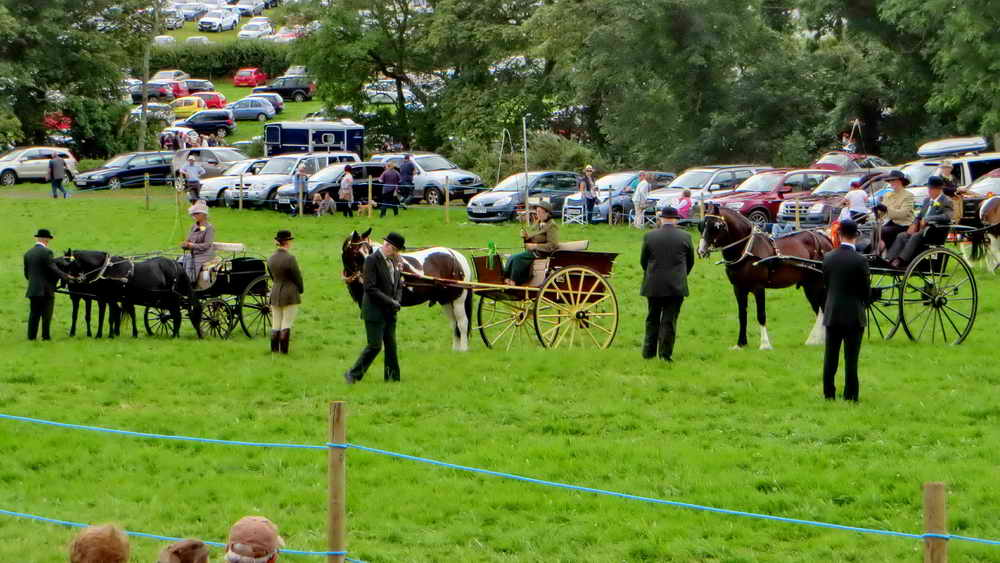 Carriage driving in the main arena