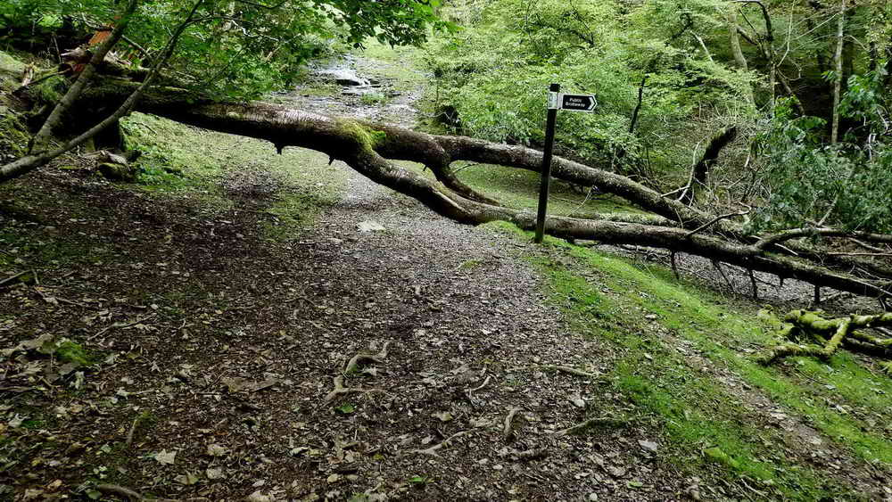 Tree fallen by the footpath signpost