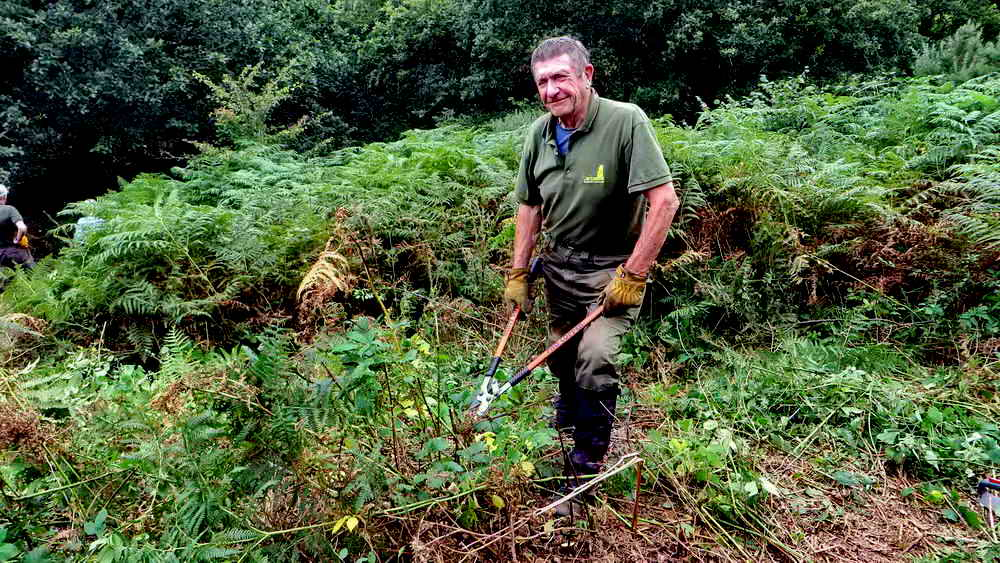Derek clearing bracken and saplings at Common Wood, 11 Sep. 2015, enhancing habitat for rare Fritillary butterflies