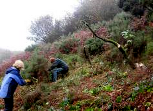 The gorse has gone