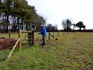 Fence in Goat Field coming down