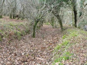 A section of Devonport Leat showing scrub trees growing from the leat bed
