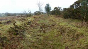 A section of cleared leat