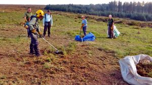 Cutting the last of the gorse