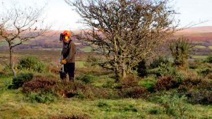 Another machinist cutting gorse