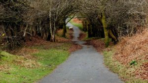 Along the cycle track