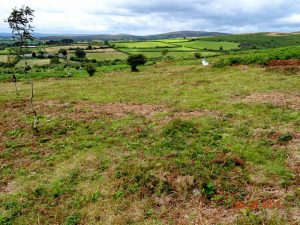 Buckland Common - after clearing