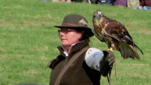 A view of one of the falcons