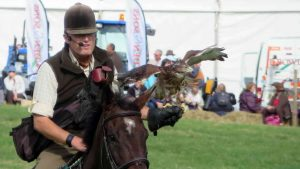 Falconry on horseback, with a running commentary