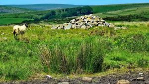 Second of two robbed cairns on the summit of Wigford Down