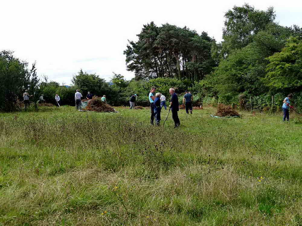 Volunteers in action in Goat Field with an area in the foreground where the bracken was previously pulled rather than cut, allowing the knapweed and other species to flower