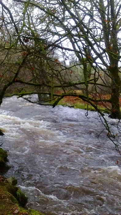 River Erme in spate.  Photo: Val Barns