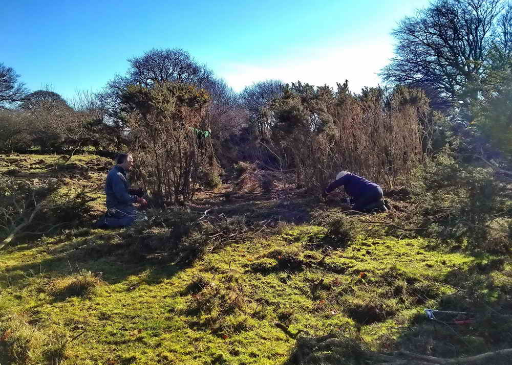 Cutting gorse. Photo: Sylvia Hamilton