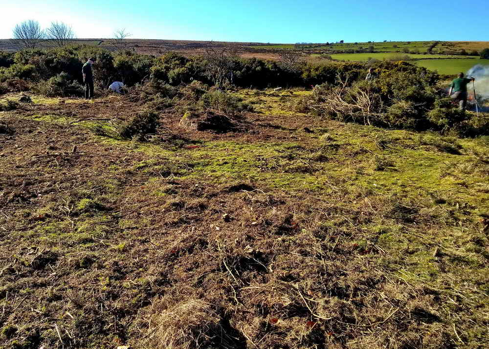Where did the gorse go? Photo: Sylvia Hamilton