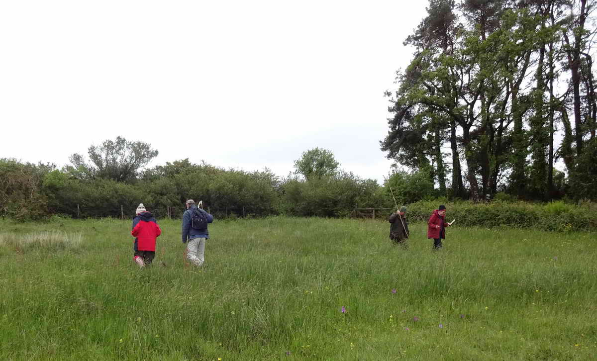Twenty-two DPA and Devon Wildlife Trust Volunteers set off in pairs or small groups, each surveying one species in one of the four meadows. A total of 4184 flowers were found.