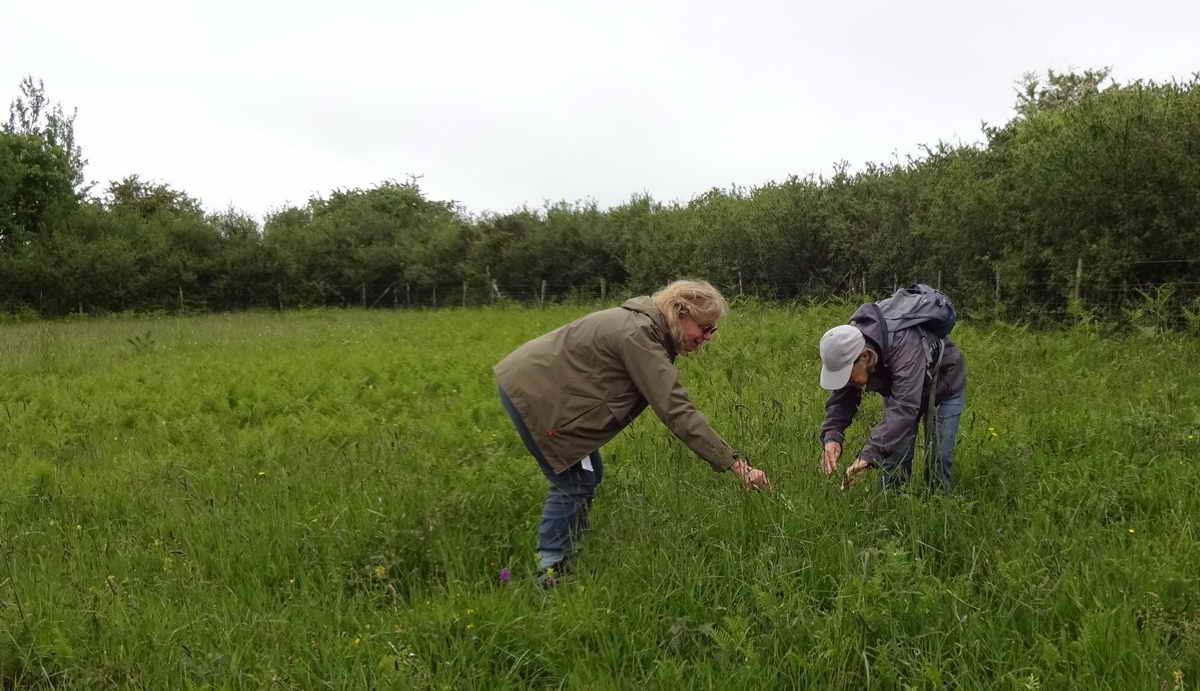 With some species, finding them can be a challenge.......in Pudsham Meadow