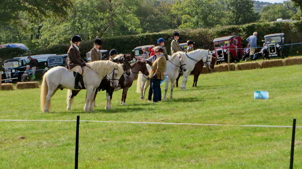 There are 20 classes of ponies and horses to be judged in the 2019 programme - you tell me!