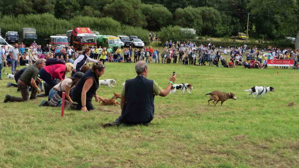 Start of the first of several heats of terrier racing, always amusing