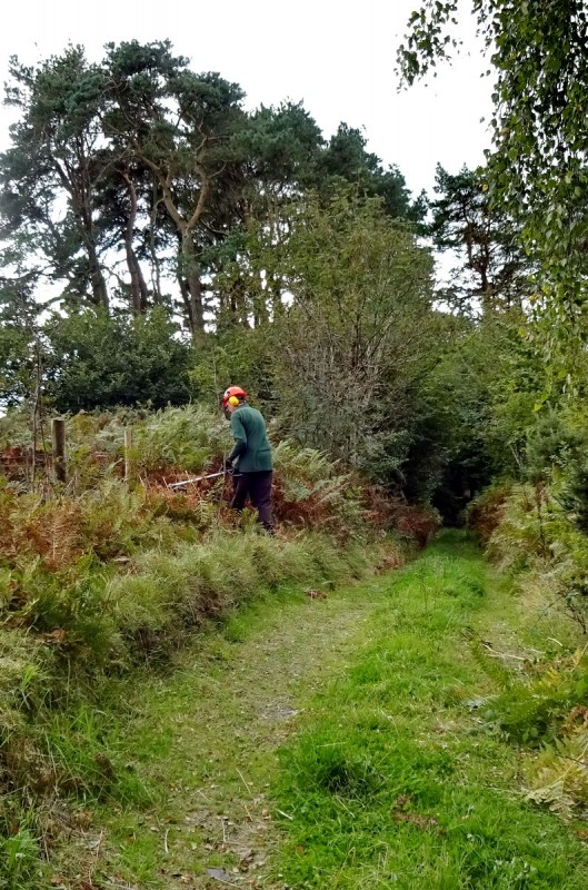 Clearing the bridleway. Photo: Hilary Marshall